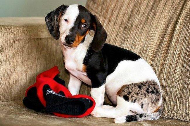 cachorros-personalizados-pela-própria-natureza-9