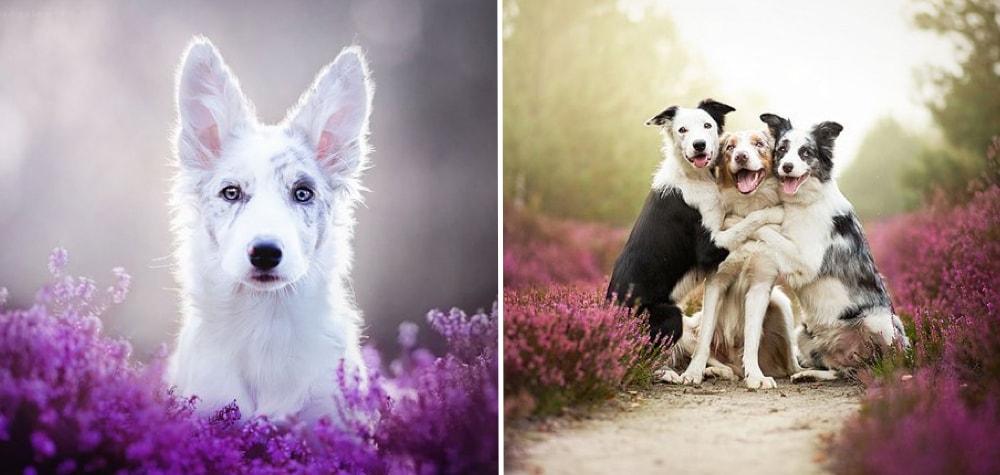 Ela tira as melhores fotos de cães que você já viu