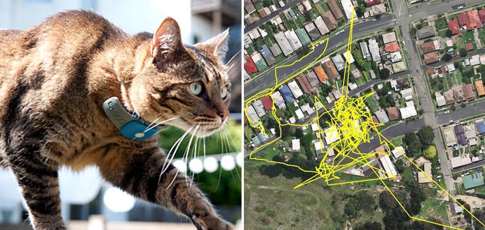 Gato-GPS-Destaque