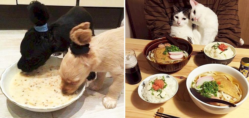 animais-amam-comida-destaq