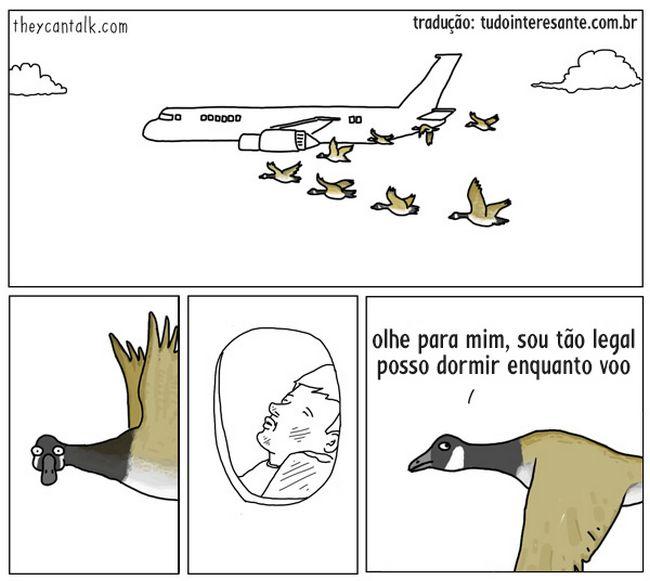 animais-falassem-16