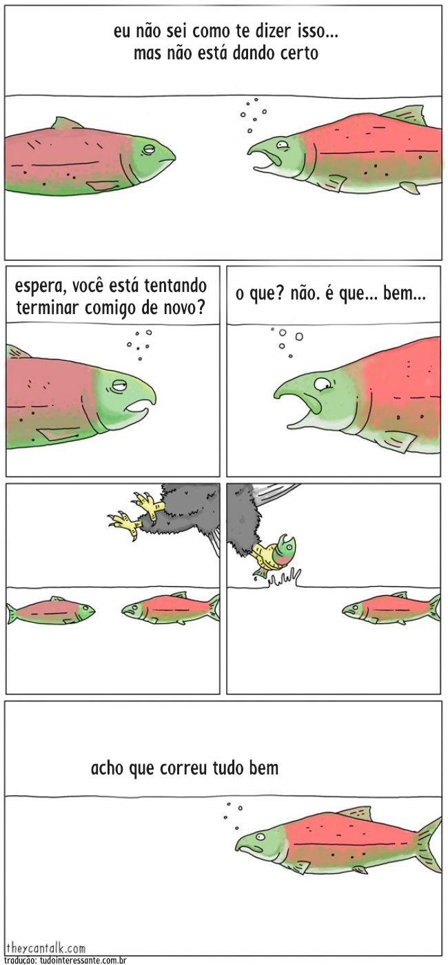 animais-falassem-8