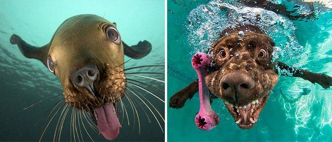 foca-cachorro-1