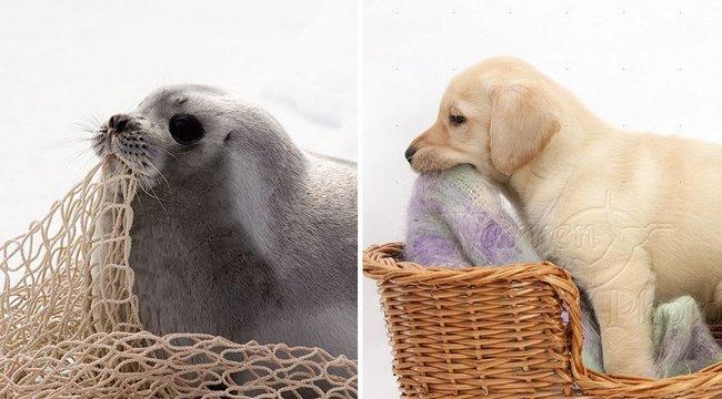 foca-cachorro-10