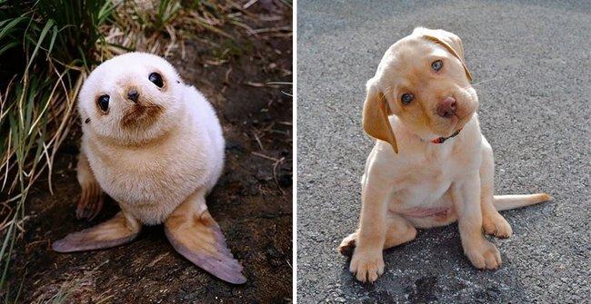 foca-cachorro-11