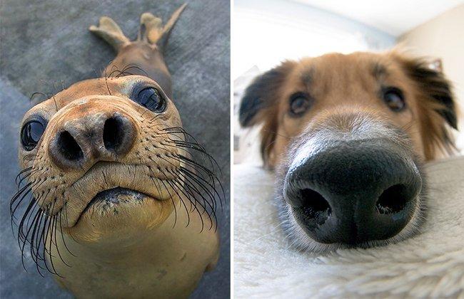 foca-cachorro-12