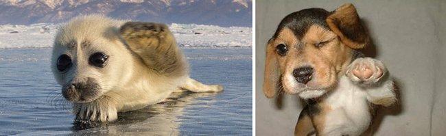 foca-cachorro-13