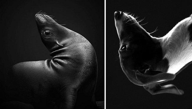 foca-cachorro-14