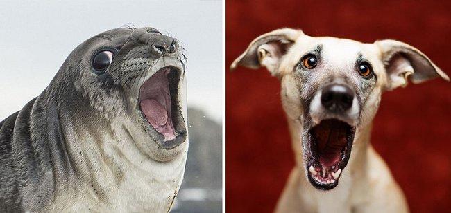 foca-cachorro-15
