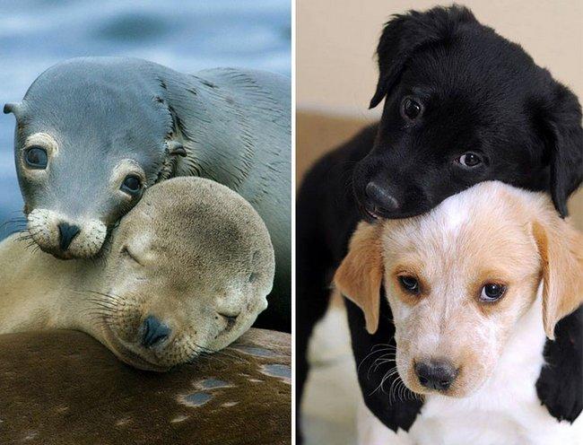 foca-cachorro-17