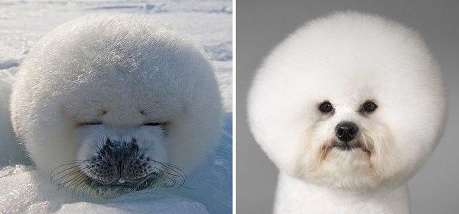 foca-cachorro-18