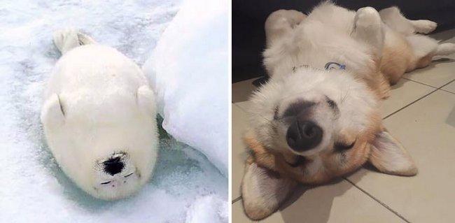 foca-cachorro-20