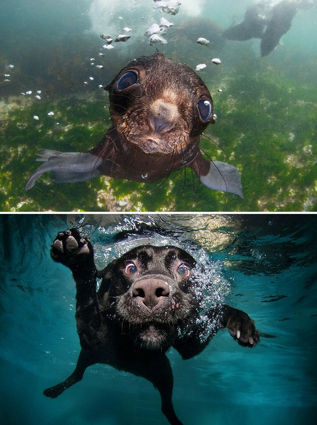foca-cachorro-23