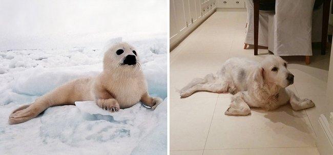 foca-cachorro-24