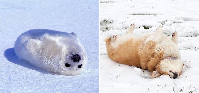 foca-cachorro-25