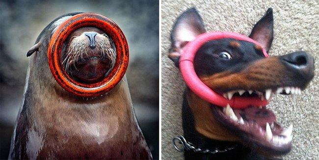 foca-cachorro-3