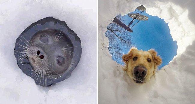 foca-cachorro-4