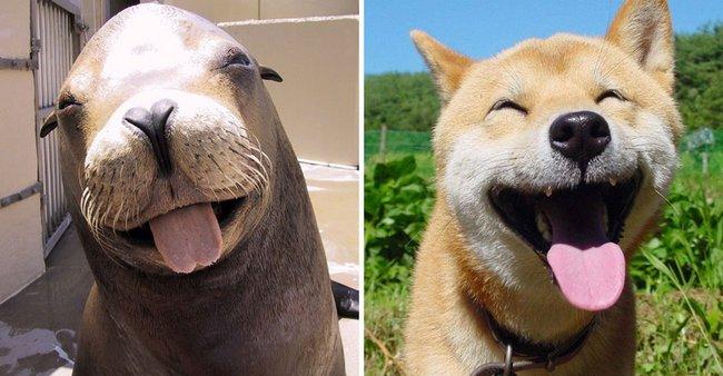 foca-cachorro-5