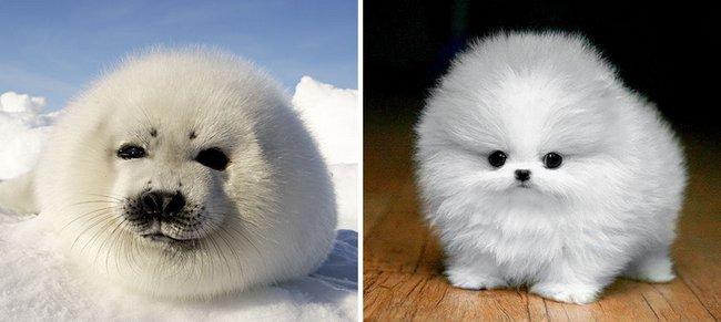 foca-cachorro-6