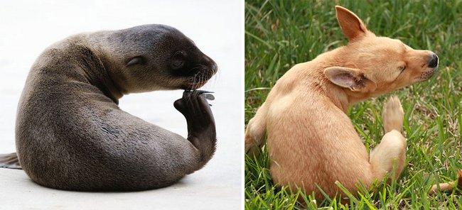 foca-cachorro-9