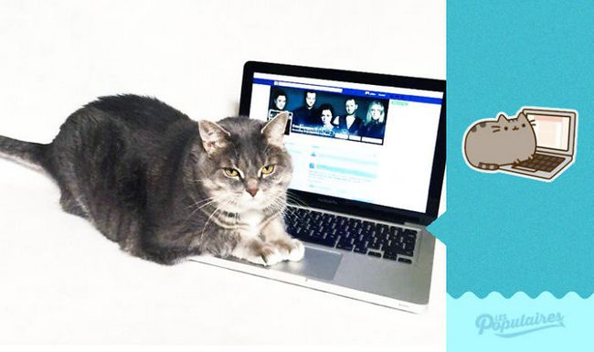 gato-recria-emoji-4
