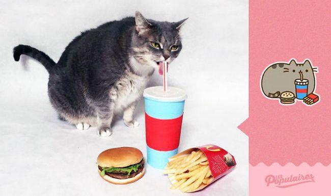 gato-recria-emoji-5
