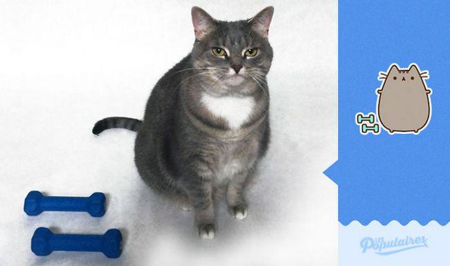 gato-recria-emoji-7