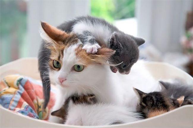 pets-maternidade-4