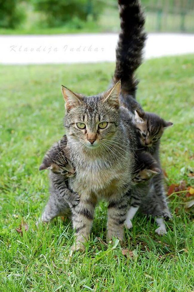pets-maternidade-8
