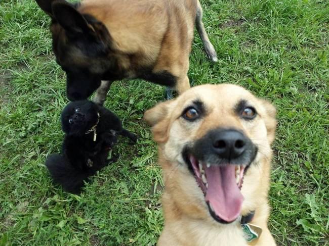 Selfie-Cachorro-1