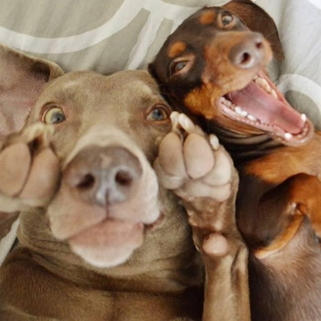 Selfie-Cachorro-13
