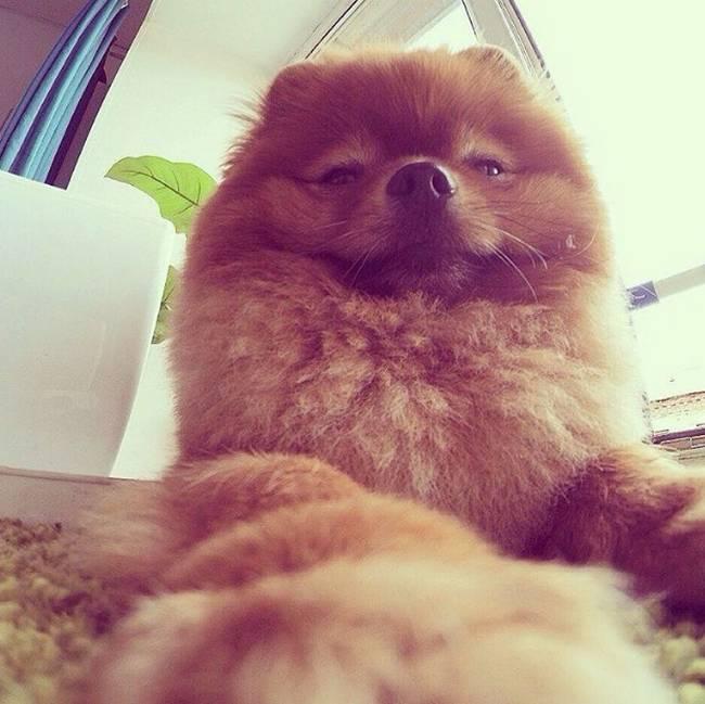 Selfie-Cachorro-18