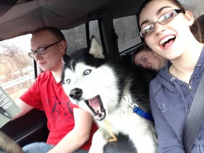 Selfie-Cachorro-20