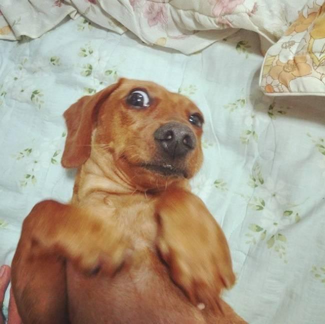Selfie-Cachorro-3