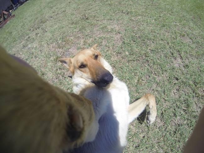 Selfie-Cachorro-4
