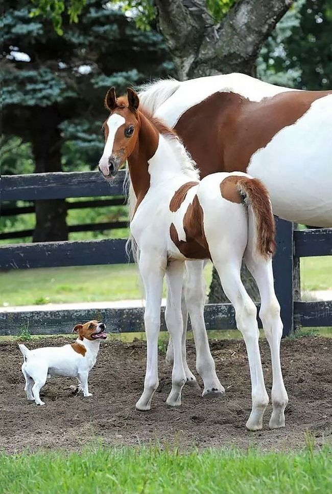 animais-identicos-racas-diferentes-1