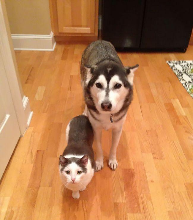 animais-identicos-racas-diferentes-3