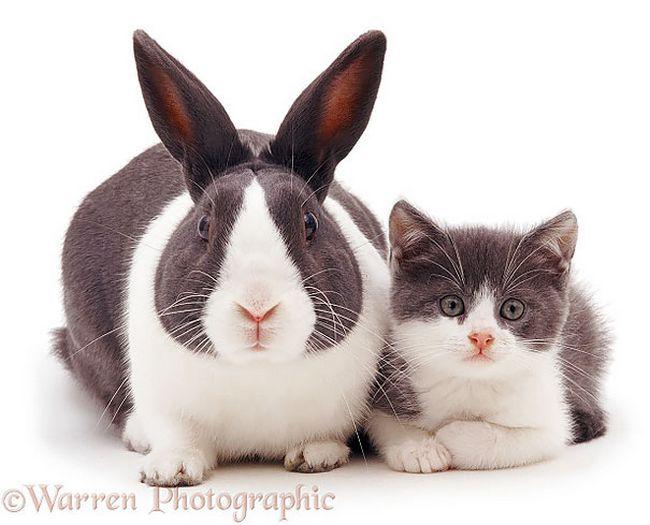animais-identicos-racas-diferentes-6