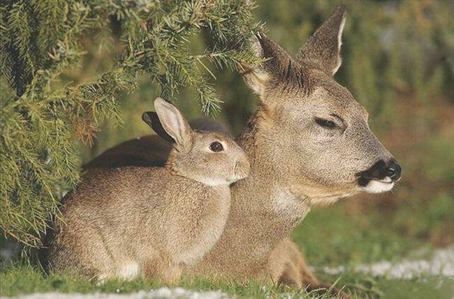 animais-identicos-racas-diferentes-7
