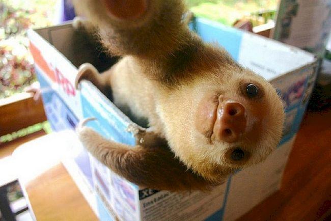 selfie-animais-14