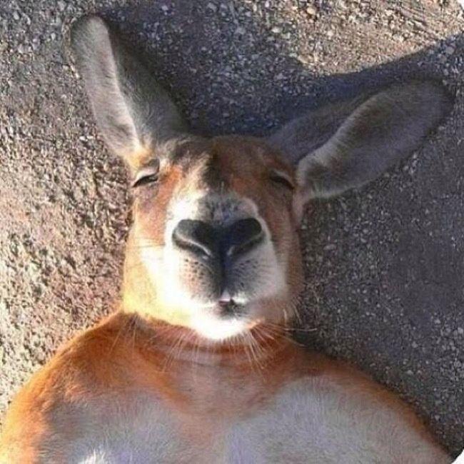 selfie-animais-2