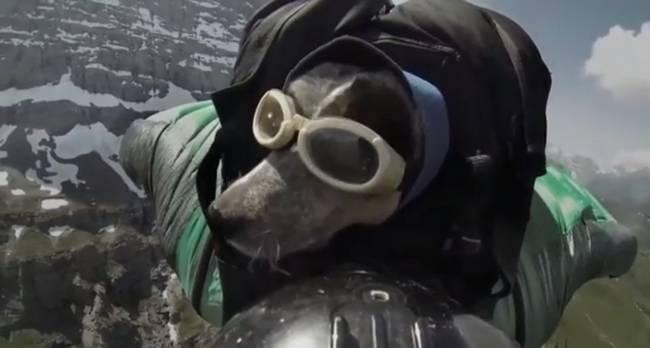 Cachorro-Humano-11