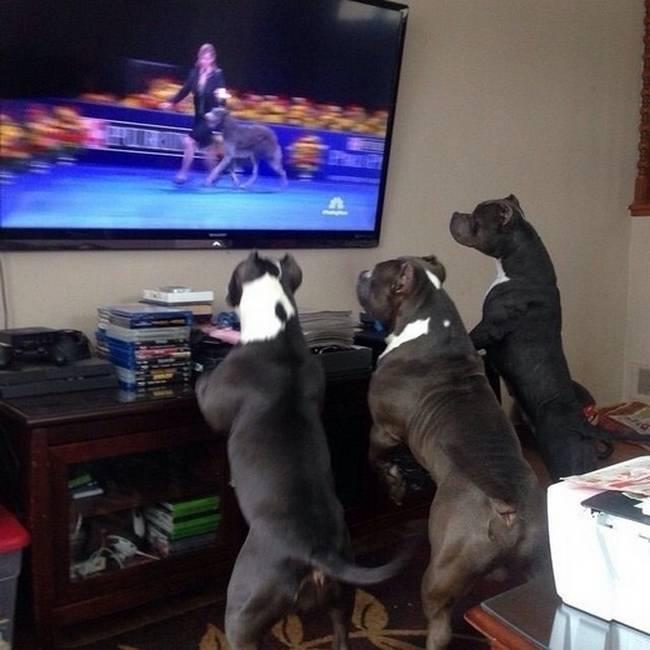 Cachorro-Humano-14