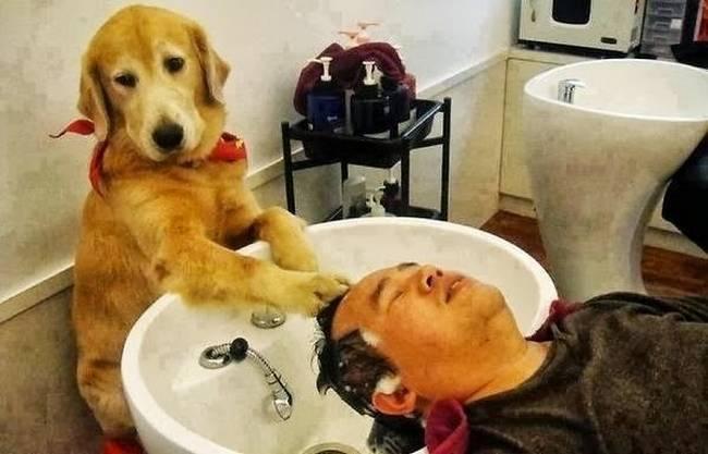Cachorro-Humano-3