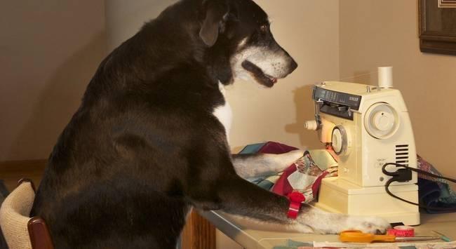 Cachorro-Humano-6