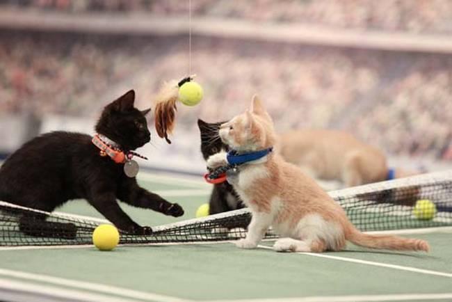 Gato-Olimpico-11
