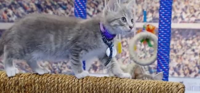Gato-Olimpico-14