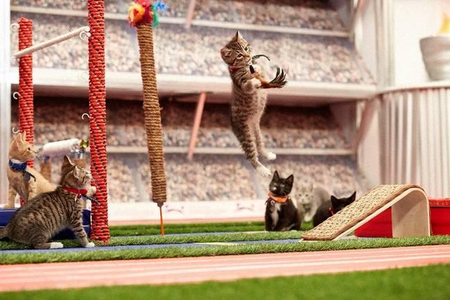 Gato-Olimpico-3