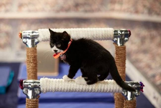Gato-Olimpico-6