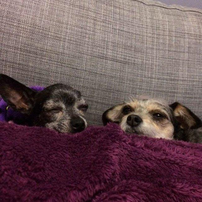 cachorros-idosos-adotados-18